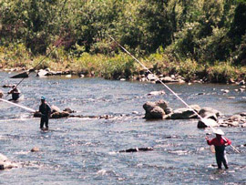 Ayu fishers use long poles as they stand in shallow streams.