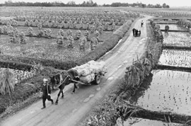 A farmer and a horse-drawncart on a road between rice fields.