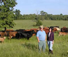 Two farmers and their cattle in an organic field.